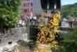 22.05.2016 Entenrennen in Schwarzach